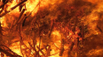 В Выборгском районе Петербурга ночью горели 3 автомобиля