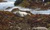 В Петербурге спасли истекающего кровью малыша тюленя