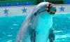 Морское шоу в Дельфинарии