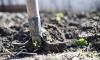 В Ленобласти дачница обнаружила скелет пропавшего пенсионера