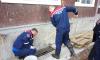 В Ленобласти из подвала школы вызволили дикую ондатру