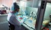 В Петербурге за неделю количество активно больных COVID-19 выросло на 6%