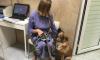 Собака, выброшенная с 4 этажа в Колпино, нашла новый дом