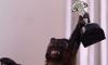 20-летняя обезьяна Кристал удостоилась премии «Оскар»
