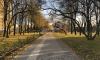 Садовники и промышленники облагородят петербургские парки