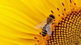 Биолог объяснил, как ученым удалось натренировать пчел диагностировать COVID