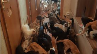 Зачем в Петербурге хотят ограничить количество животных в квартире, и как бороться с этим сейчас