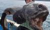 Японец выловил двухметровую рыбу-мутанта недалеко от Фукусимы