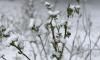 В Лугу и Тихвин пришел снежный май