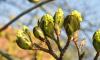 В Петербурге в январе распустились весенние растения