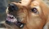 В Уфе на 9-летнего мальчика напала собака