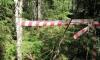 Разложившийся до скелета труп в черной куртке и брюках нашли грибники в лесу под Комарово