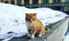 Грядет похолодание: в Ленобласть надвигаются морозы до -17