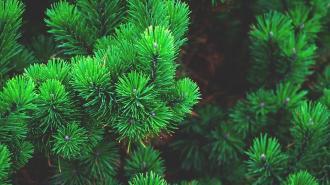 """В Александровской больнице посадят хвойные деревья в рамках акции """"Сад памяти"""""""