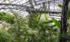 В Ботаническом саду тайно проводили незаконные вечеринки