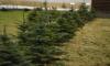 Экологические дружины Ленобласти будут работать по закону