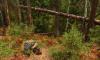 В Линдуловской роще появится экспериментальный волонтерский лагерь для любителей экотуризма