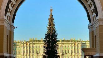 Ель на Дворцовой площади украсят к 20 декабря