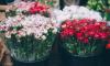 На Среднем проспекте троица на Land Cruiser ограбила цветочный магазин