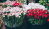 Во Фрунзенском районе мужчина с ножом ограбил цветочный магазин