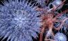 В США пересадка костного мозга излечила от ВИЧ двоих больных