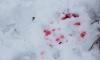 В Колпино пятеро гопников избивали прохожего - их задержала полиция