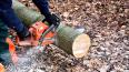 Выборгский браконьер получил два года за вырубку леса