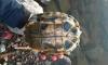 Необычный улов: петербургский рыбак поймал в Неве черепаху