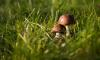 Петербуржец ушел за грибами и не вернулся