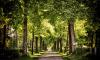 Администрация Выборгского района открывает кладбища для посещения