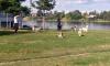 В Рыбацком мужчина выгуливал рысь: фото