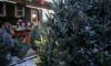 В Петербурге откроется еще девять ёлочных базаров