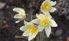 """Самым запоминающимся """"дневником цветения"""" считают страницу Ботанического сада"""