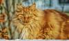 Комитет по ЖКХ Ленобласти намерен разрешить жить в подвалах кошкам и собакам
