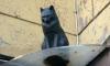 Подростки Петербурга бросились на кота Елисея, но остались ни чем