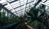 Ботанический сад в конце недели отметит свое 305-летие