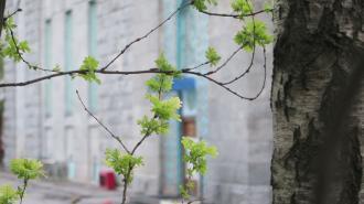 В Ленобласти ночью 20 апреля температура местами опустится до -6 градусов