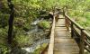 Вокруг озер в деревне Лопухинка продолжат экологическую тропу
