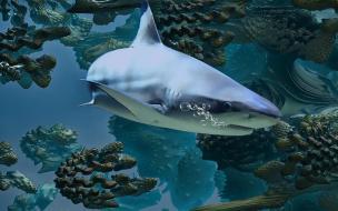 Учёные из Бельгии обнаружили у берегов Новой Зеландии три новых вида глубоководных акул, которые светятся в темноте