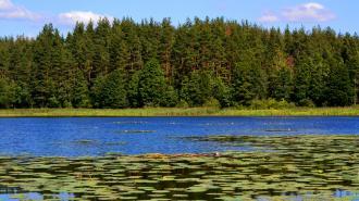 Россиян ждет настоящее лето в ближайшие дни, возможна аномальная жара