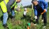 Родители посадили в Приморском районе аллею в память об умерших детях