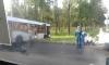 Появились фото с места столкновения двух набитых людьми автобусов в Петергофе