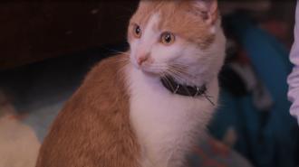 В Петербурге создадут профсоюз музейных котов