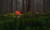 В Выборгском  лесу нашли тело мужчины