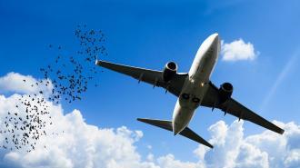 В аэропорту Нижневартовска самолет при посадке столкнулся со стаей птиц