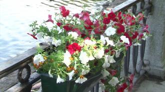 К майским праздникам Петербург украсили более 560 000 цветов