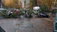 В Красногвардейском районе дерево рухнуло на припаркован ...