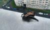 На севере города петербуржец заметил у себя летучую мышь