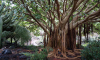 Ботанический сад ищет волонтеров для уборки из-за отсутствия денежных средств