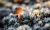 Синоптики: В Ленобласте температура упадет до -4 градусов, возможна гололедица